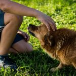 a kid with a dog, personal injury
